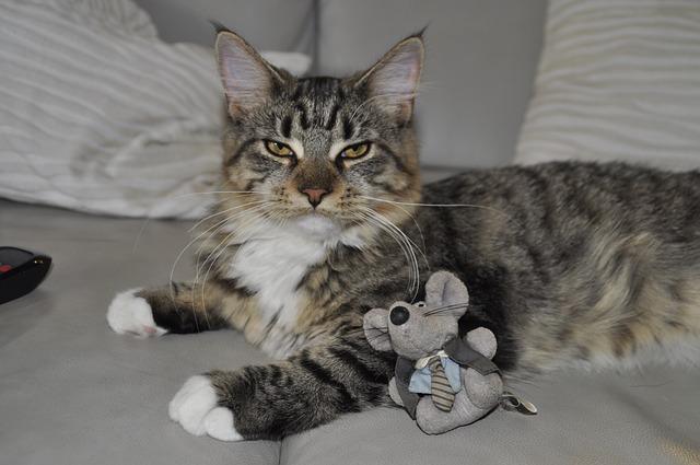 חטיפים שכדאי לתת לחתול שלכם